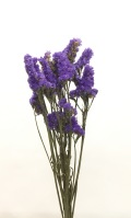 スターチス・紫・千歳