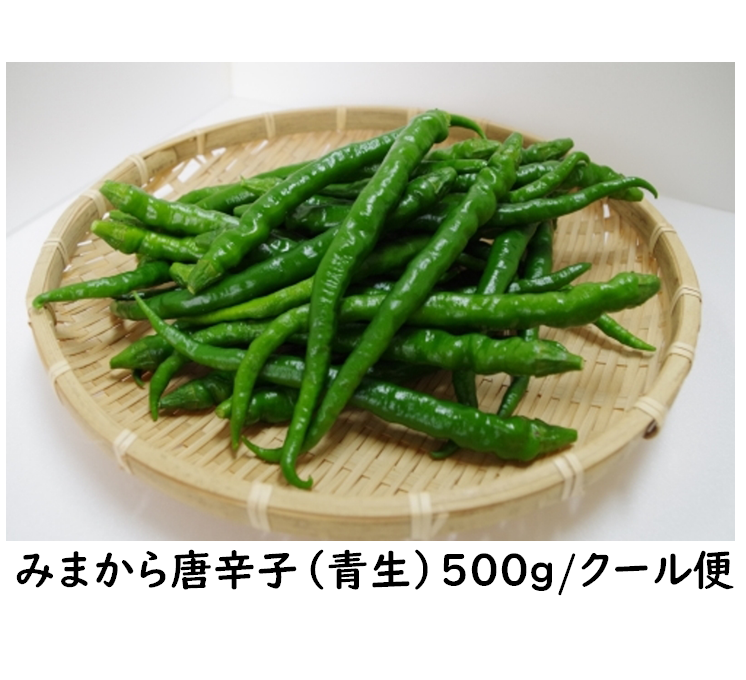 予約受付中【2021年産】みまから唐辛子(青生)500g  /クール便