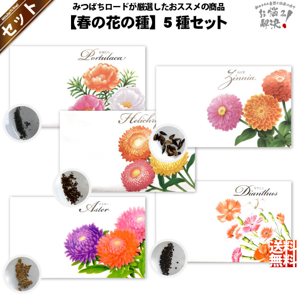 【お手軽 / 5種】春の花の種 (1セット)【送料無料】【1000円】