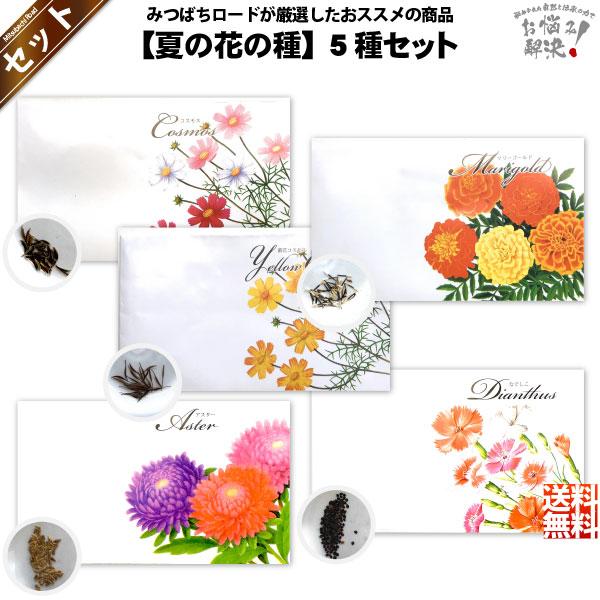 【お手軽 / 5種】夏の花の種 (1セット)【送料無料】【1000円】
