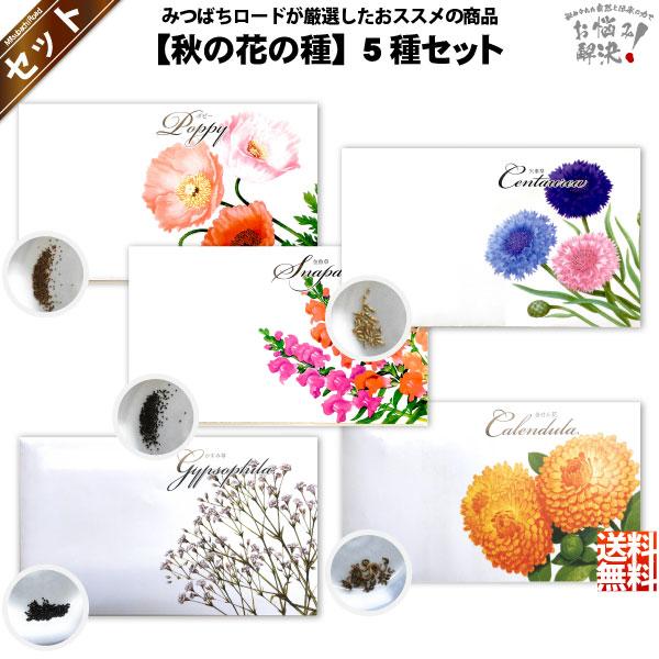 【お手軽 / 5種】秋の花の種 (1セット)【送料無料】【1000円】