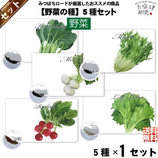 【お手軽 / 5種】野菜の種 (1セット)【送料無料】【1000円】