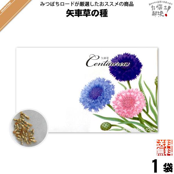【お手軽 200円】矢車草の種(1袋)【送料無料】