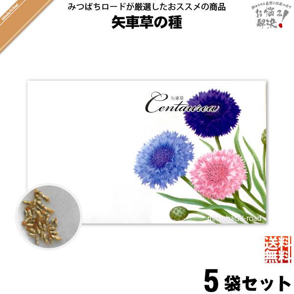【お手軽 / 5個セット】矢車草の種(1袋)【送料無料】