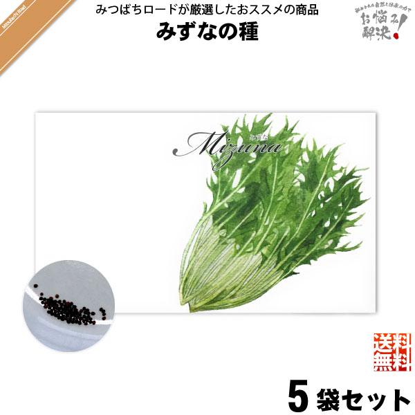【お手軽 / 5個セット】みずなの種(1袋)【送料無料】【1000円】