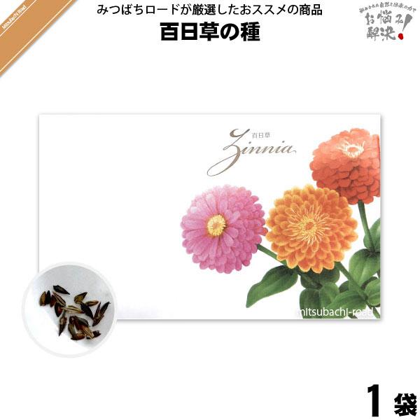 百日草の種(1袋)【5250円以上で送料無料】