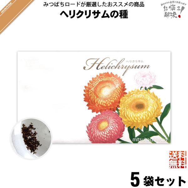 【お手軽 / 5個セット】ヘリクリサムの種(1袋)【送料無料】【1000円】