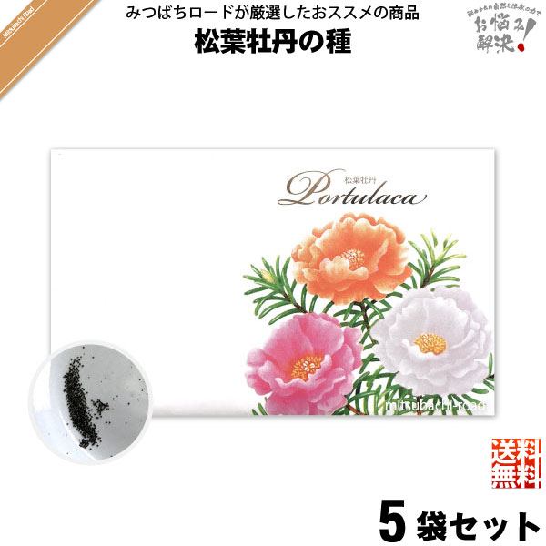 【お手軽 / 5個セット】松葉牡丹の種(1袋)【送料無料】【1000円】