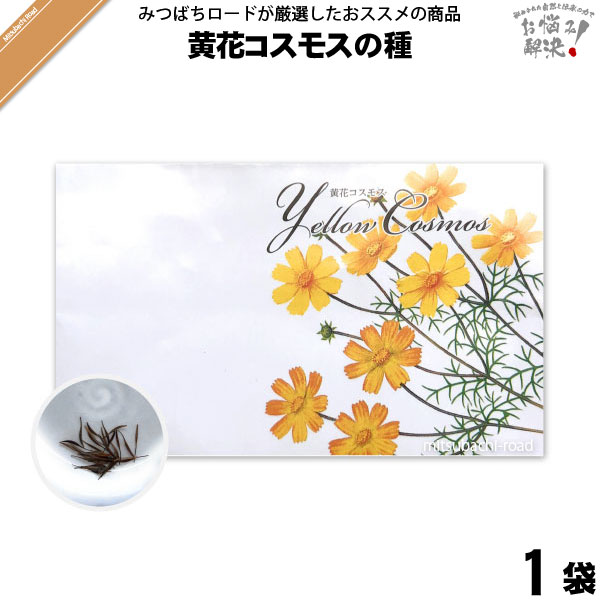 黄花コスモスの種(1袋)【5250円以上で送料無料】