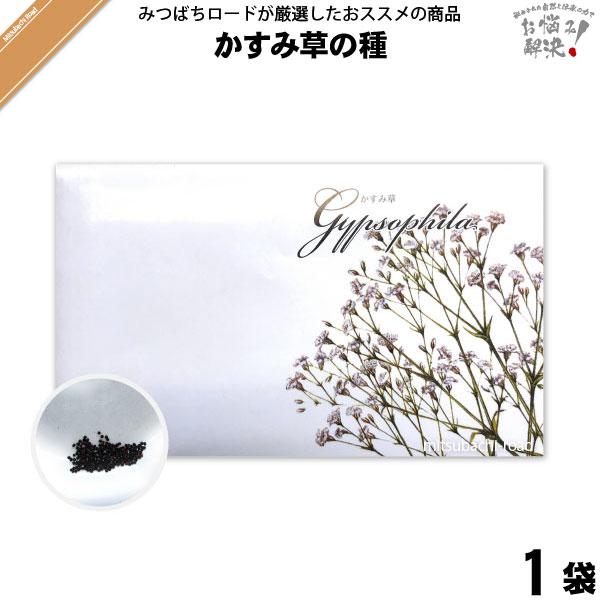 かすみ草の種(1袋)【5250円以上で送料無料】