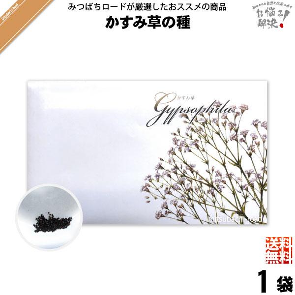 【お手軽 200円】かすみ草の種(1袋)【送料無料】