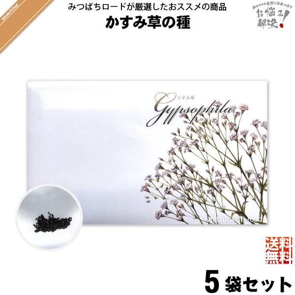 【お手軽 / 5個セット】かすみ草の種(1袋)【送料無料】【1000円】