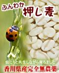 ふんわか押し麦 600g 発芽した胚芽付き 完全農薬不使用、自然栽培で育てられた四国香川県の元気麦