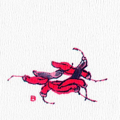 ★リフレコースター(唐辛子) 50枚