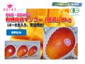 宮古島完熟マンゴー 楽園の果実