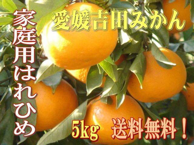 愛媛吉田みかん・希少種はれひめ(晴れ姫)5Kg家庭用【送料無料】