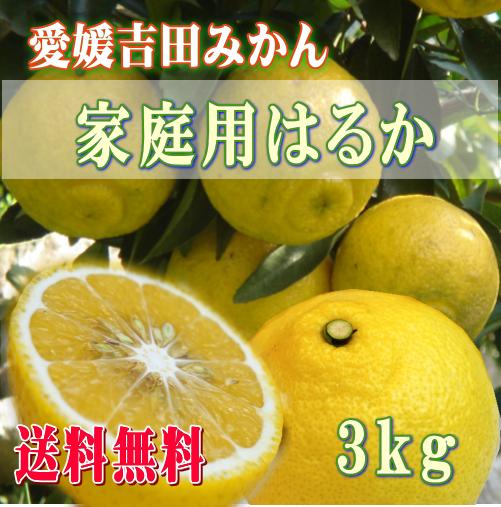 愛媛吉田みかんはるかみかん3kg・ご家庭用【送料無料】