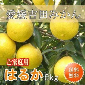 愛媛吉田みかんはるかみかん5kg・ご家庭用【送料無料】