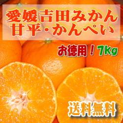 愛媛吉田みかん・甘平・かんぺい・7kg・お徳用大きめサイズ・送料無料