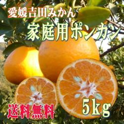 愛媛吉田みかん・ポンカン5kgご家庭用【送料無料】
