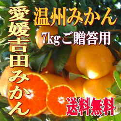 【送料無料】【贈答用】南愛媛吉田産 石地・温州みかん厳選・7kg
