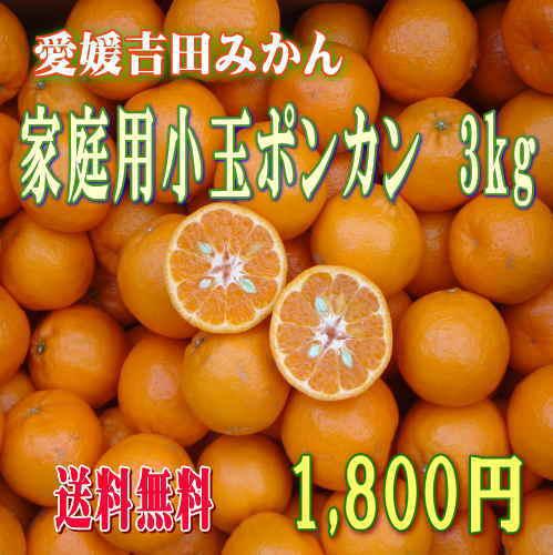 愛媛吉田みかん・ポンカン小玉3kgご家庭用【送料無料】