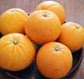 愛媛吉田みかん・ネーブルオレンジ・徳用3kg位 贈答にも 【送料無料】