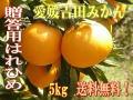 愛媛吉田みかん・希少種はれひめ(晴れ姫)5Kg贈答用【送料無料】