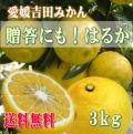 愛媛吉田みかんはるかみかん3kgおすそ分け、ご贈答にも【送料無料】