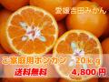 愛媛吉田みかん・ポンカン20kgご家庭用【送料無料】