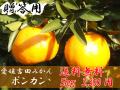 愛媛吉田みかん・ポンカン5kg贈答用【送料無料】