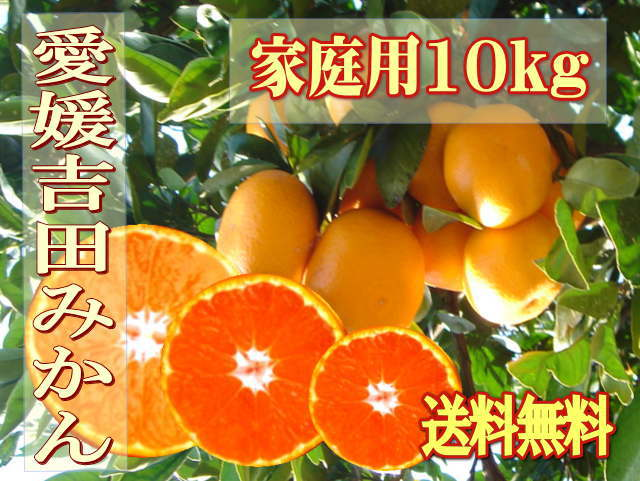 【送料無料】愛媛吉田・玉津みかん・温州みかん・ご家庭用10kg★S〜2L★