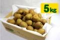 キウイフルーツ(5kg・46〜56個程度)