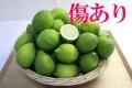 国産グリーンレモン(3kg)A品・B品込み