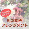 Moccaにおまかせ8000円アレンジ