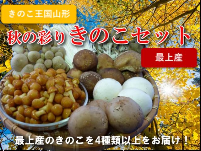 秋の彩り きのこセット 最上産 4種類以上 1kg