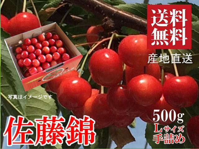 山形さくらんぼ 佐藤錦 Lサイズ 500g 手詰め 新庄産 露地栽培 送料無料