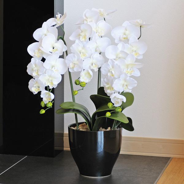 光触媒胡蝶蘭、造花 光の楽園 胡蝶蘭セリースW