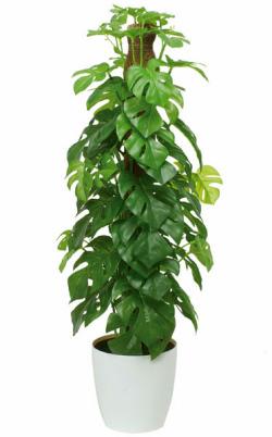 光触媒人工観葉植物 光の楽園 フレッシュポールスプリットM