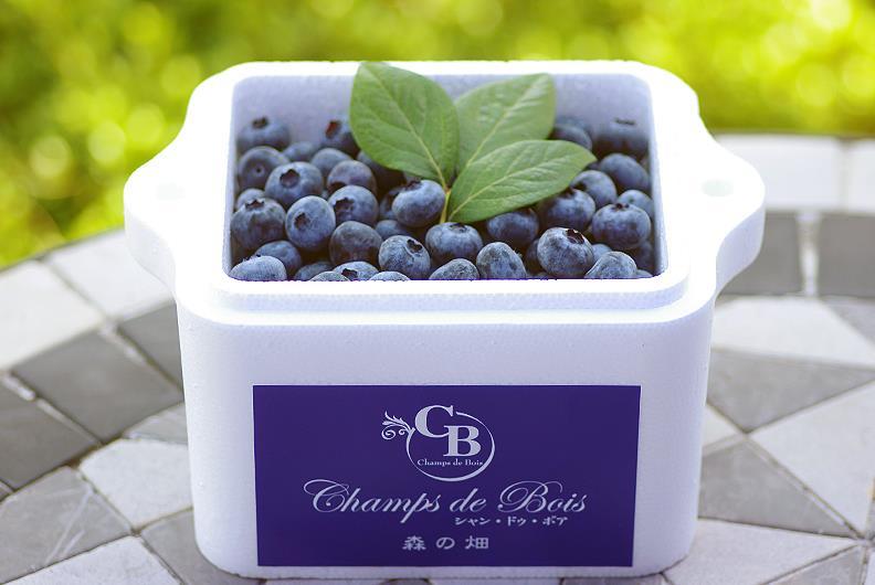 大粒ブルーベリー「森のサファイア」冷凍果実