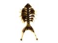 踊る接骨院3.2 グリパンペッパー