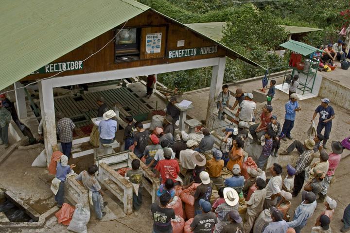 グァテマラ エル・インヘルト・ウノ農園シティ