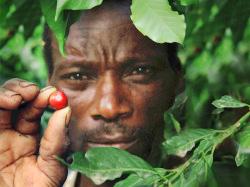 タンザニア「ブラックバーン農園」(シティロースト)200g
