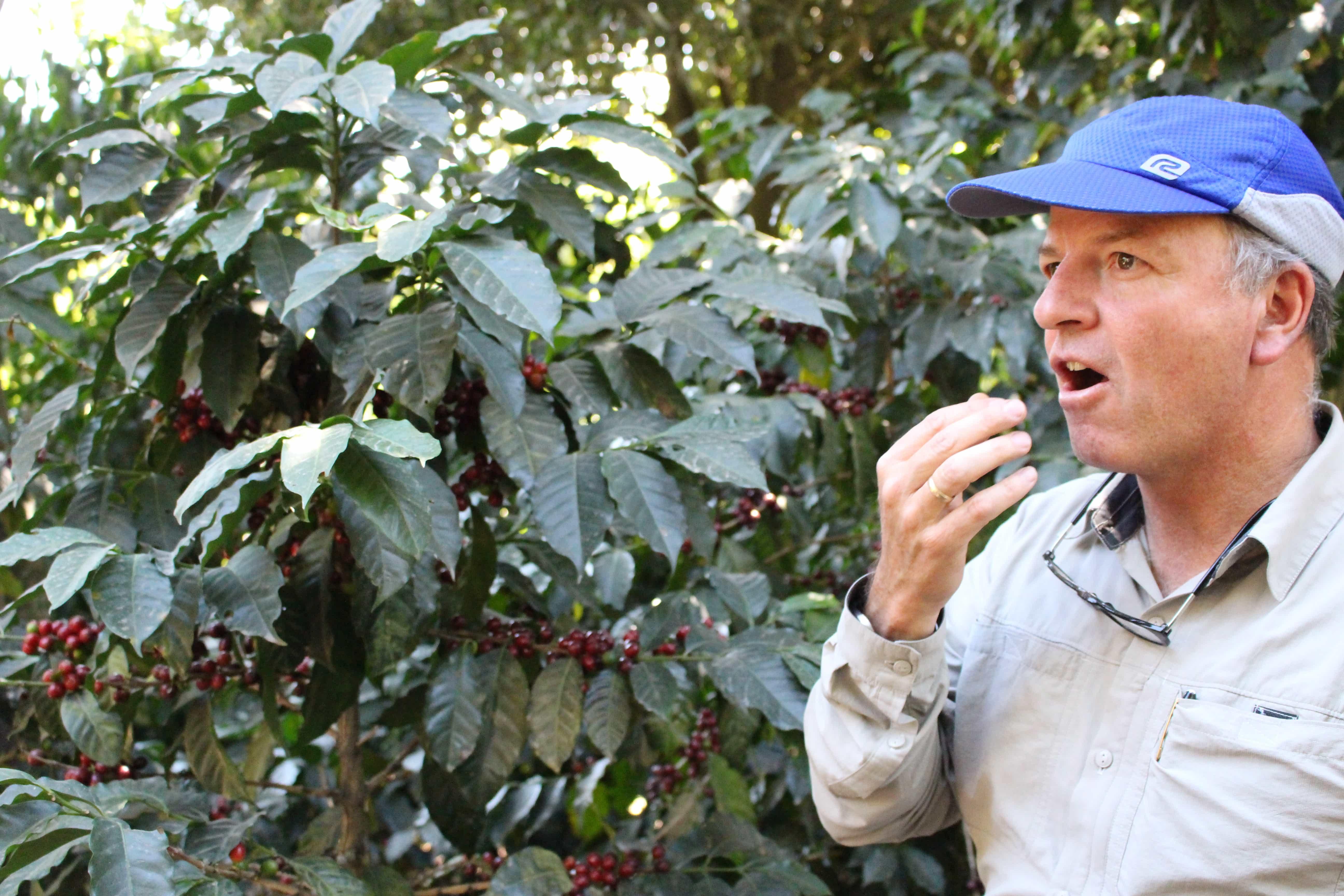 グァテマラ「サンタ・カタリーナ農園HAB」(フレンチロースト)200g