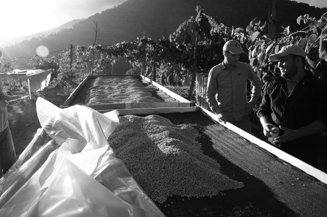 コスタリカ ラ・ケブラダ農地シティ