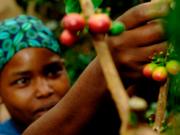 タンザニア「ブラックバーン農園」(フレンチロースト)200g