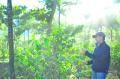 グァテマラ「ラ・メルセー農園」(フレンチロースト)200g