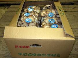生椎茸 中級品 3kg