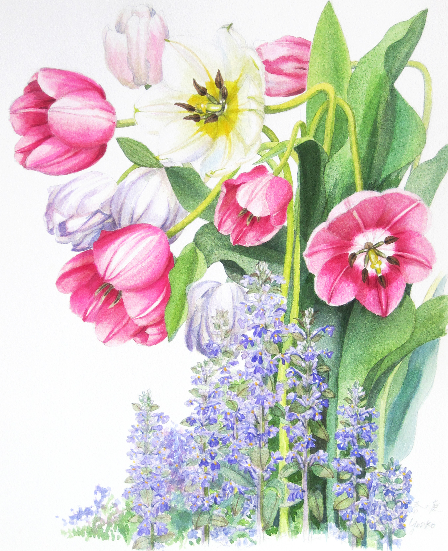 志村好子「」春の庭」(チューリップ)水彩画(画寸337×408mm)