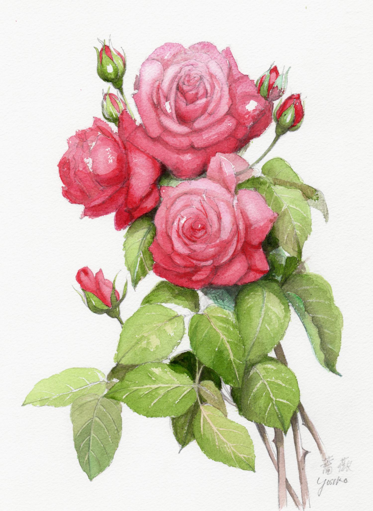 志村好子「薔薇」水彩(画寸250×330mm)
